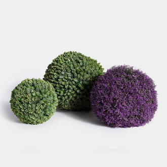 Dehydrated Ball plants | Crimons