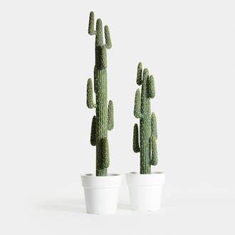 Dehydrated High Cactus Mexico | Crimons